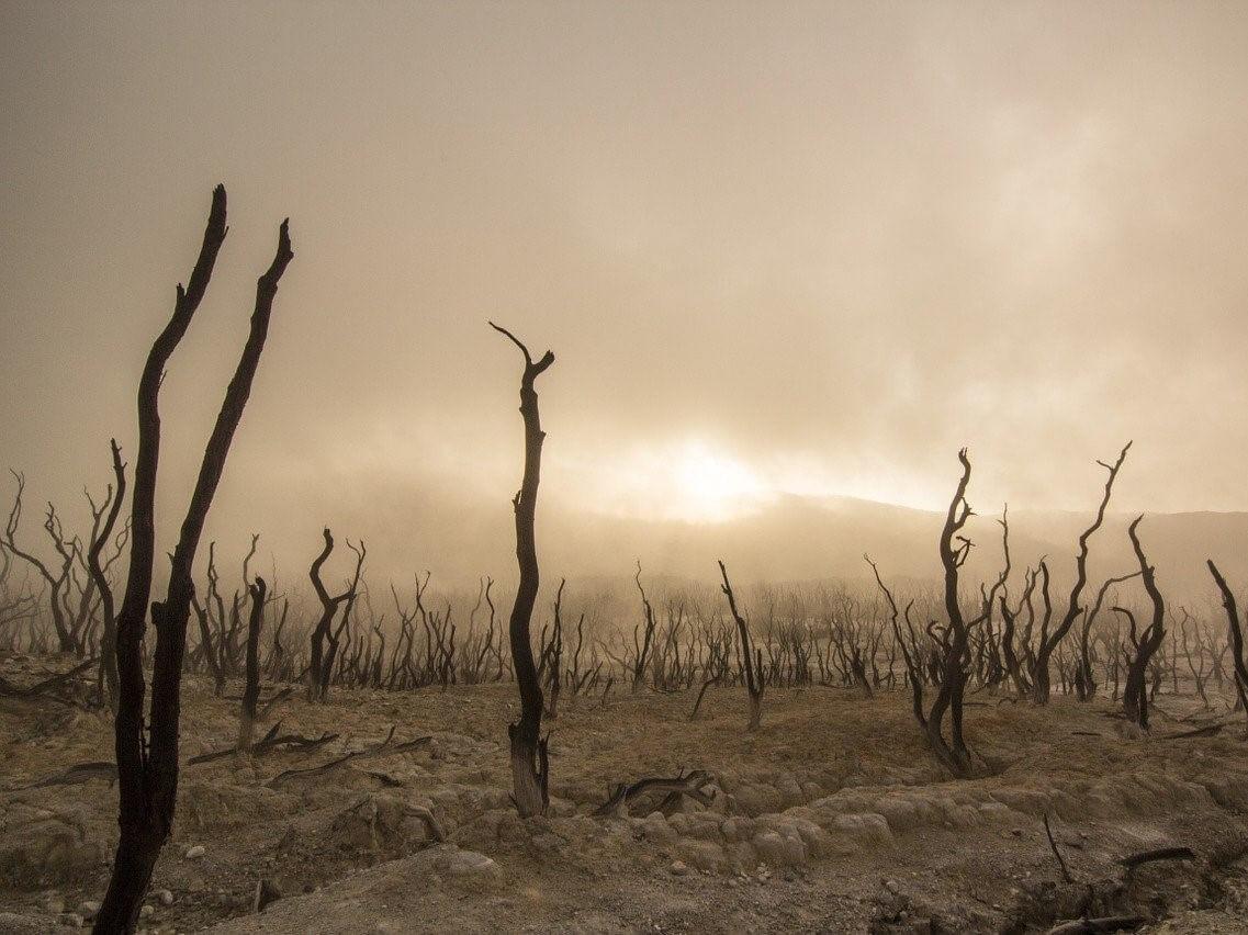 Międzynarodowy apel biskupów: Gospodarka musi skończyć z wykorzystywaniem człowieka i środowiska
