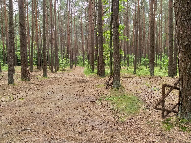 Łopuchowski las